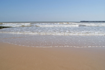 Local beaches with dog bans